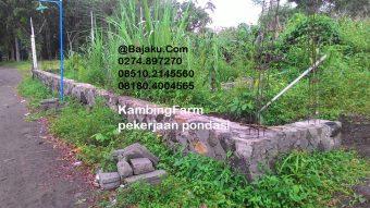 Kandang Kambing KambingFarm Sleman Yogyakarta oleh BAJAKU